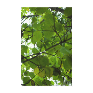 Shady tree with large green leaves canvas print