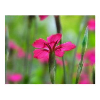 Shady Woodland Dianthus Postcard
