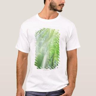 Shafts of Sunlight T-Shirt