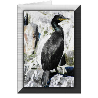 Shag bird birthday card, wildelife birds greeting card