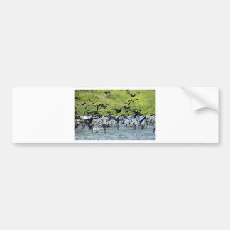 Shag flock lift off El Salvador Car Bumper Sticker