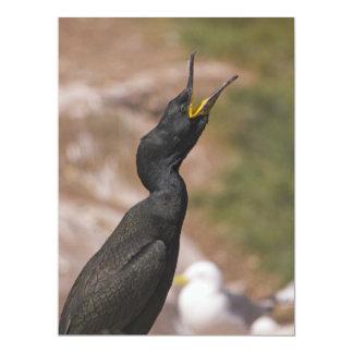 "Shag Long Necked Bird Invitation 6.5"" X 8.75"" Invitation Card"