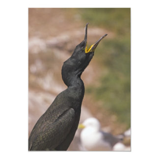 "Shag Long Necked Bird Invitation 5"" X 7"" Invitation Card"