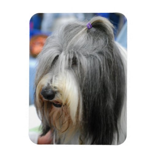 Shaggy Bearded Collie Magnet Rectangle Magnet