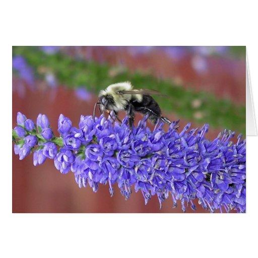 Shaggy Bee Greeting Card