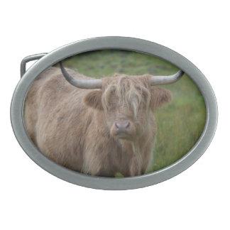 Shaggy Blonde Highland Cow Oval Belt Buckles