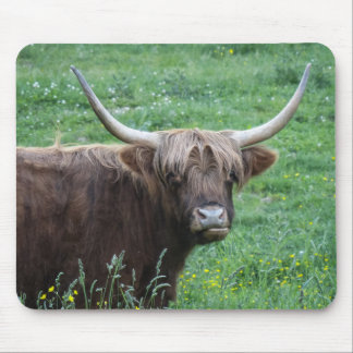 Shaggy Haired Long Horned Steer in Grass Mouse Pad