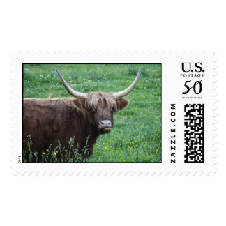 Shaggy Haired Long Horned Steer in Grass Postage