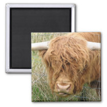 Shaggy Highland Cow Magnet