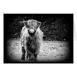 Shaggy Highland Cow Photo (Black & White) Greeting Card