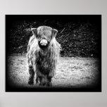 Shaggy Highland Cow Photo (Black & White) Print
