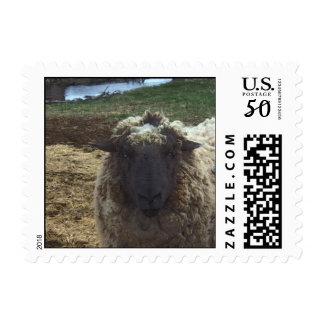 Shaggy Sheep Postage