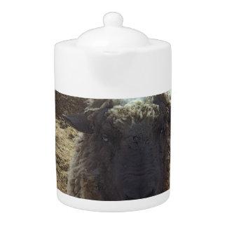 Shaggy Sheep Teapot