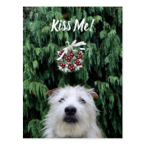 Shaggy white dog mistletoe Christmas Postcard