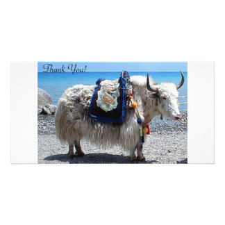 Shaggy Yak Wearing Brightly COlored Tack Card