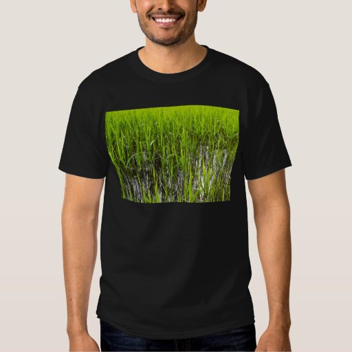 Shallow Pond Reeds T-Shirt