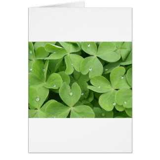 Shamrock Clover Leaves Card