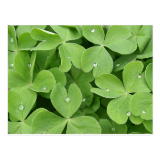 Shamrock Clover Leaves Postcard