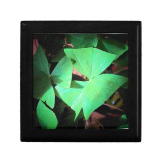 Shamrock Leaves box