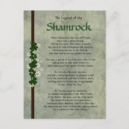 Shamrocks Postcard
