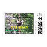 Shan lindo del Tai del cachorro del oso de panda g