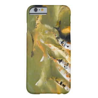 Shanghai, China Barely There iPhone 6 Case