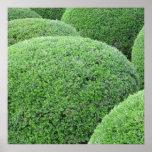 Shaped Green Hedge Print