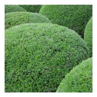 Shaped Green Hedge Print