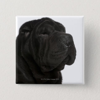 Shar Pei (1 year old) close-up Button