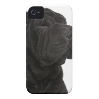 Shar Pei (1 year old) close-up iPhone 4 Cover
