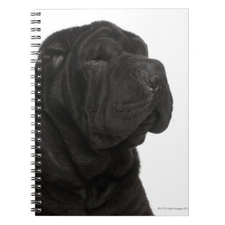 Shar Pei (1 year old) close-up Spiral Note Book