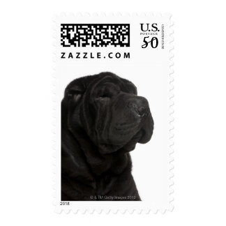 Shar Pei (1 year old) close-up Postage