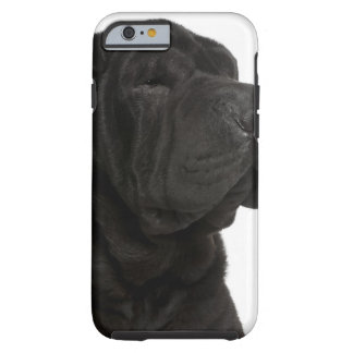 Shar Pei (1 year old) close-up Tough iPhone 6 Case