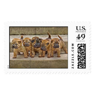 Shar-Pei 4 week Old Pups in a Line Postage Stamp