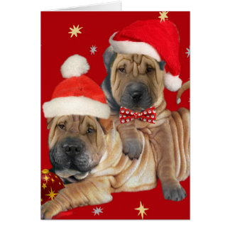 Shar-pei Brothers Christmas Cards