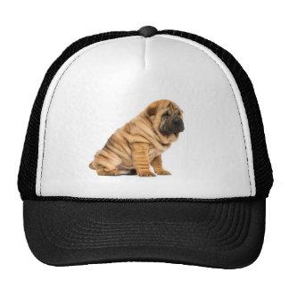 Shar pei Dog Hats