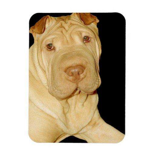 Shar Pei Dog Premium Magnet Magnets