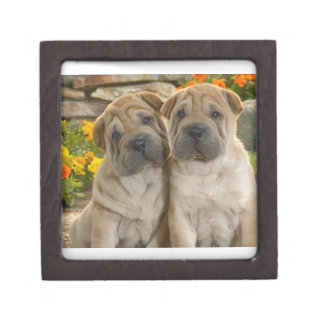 Shar Pei Puppies Gift Box