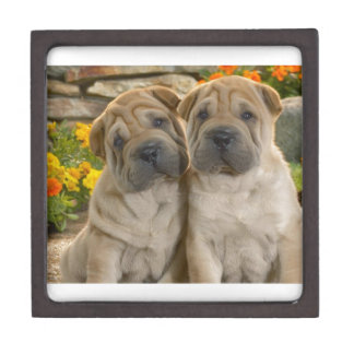 Shar Pei Puppies Keepsake Box