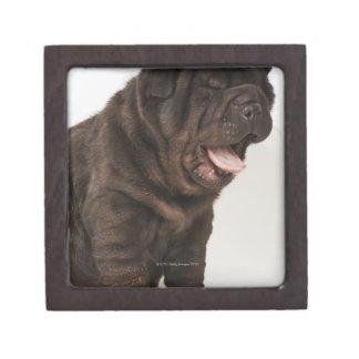 Shar Pei puppy yawning, studio shot Gift Box