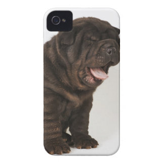 Shar Pei puppy yawning, studio shot iPhone 4 Case