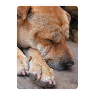 shar pei sleeping.png card