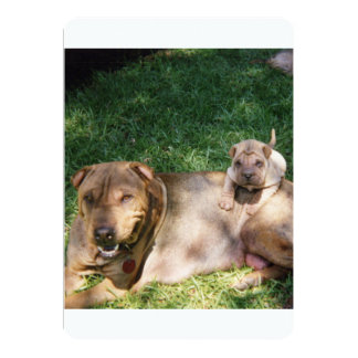 Shar-Pei_with_litter.png Card