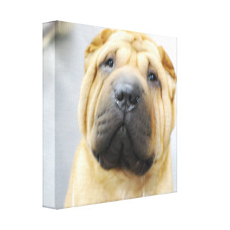Shar Pei with Wrinkles Canvas Print