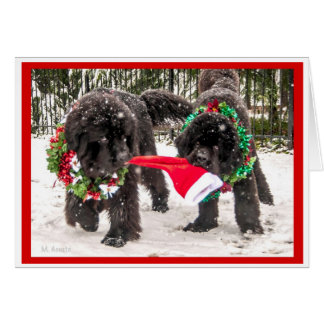 Sharing the season the Newfie Way Greeting Cards