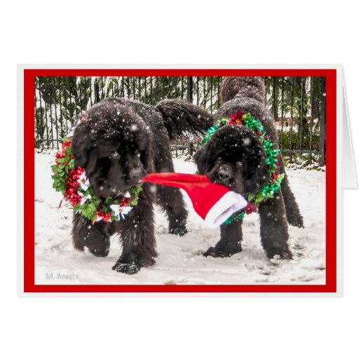 Sharing the season the Newfie Way! Greeting Cards