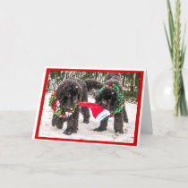 Sharing the season the Newfie Way! Holiday Card