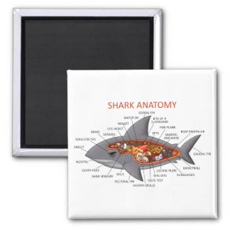 Shark Anatomy 2 Inch Square Magnet