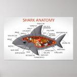 Shark Anatomy Poster