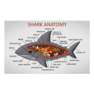 Shark Anatomy Poster